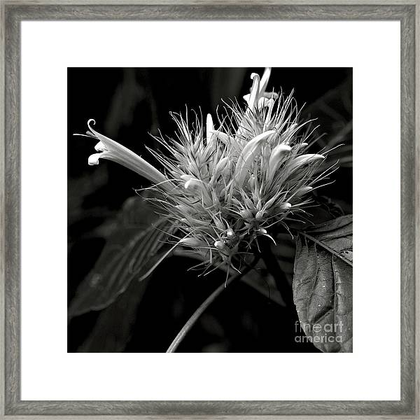 Bizarre Flower Charm Framed Print