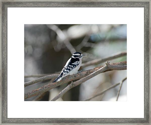 Black And White Bird Framed Print