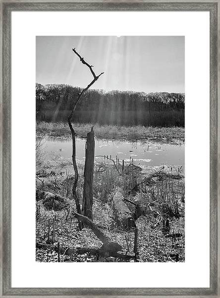 Black And White Bog Framed Print