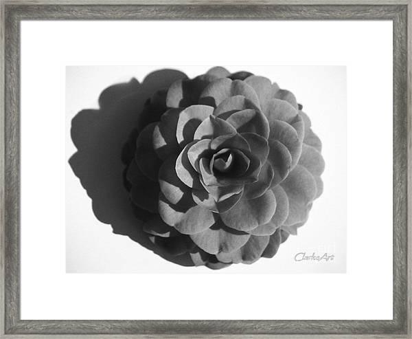 Camellia In Black And White Framed Print