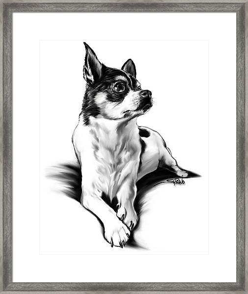 Black And White Chihuahua By Spano Framed Print