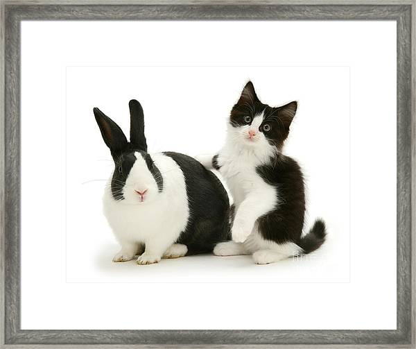 Black And White Double Act Framed Print