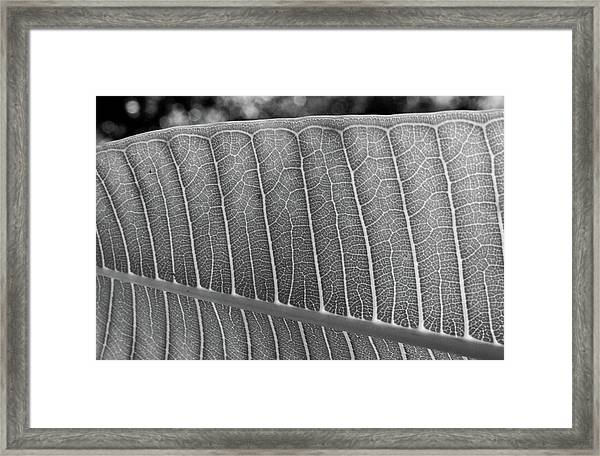 Black And White Leaf Framed Print