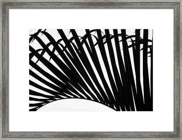 Black And White Palm Branch Framed Print