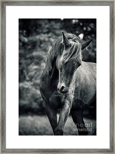 Black And White Portrait Of Horse Framed Print