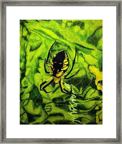 Black And Yellow Agriope Framed Print