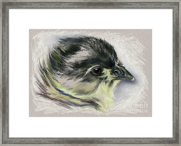 Black Australorp Chick Portrait Framed Print