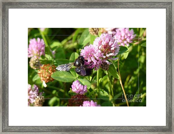 Black Bee On Small Purple Flower Framed Print