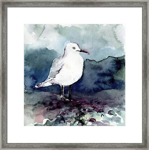 Black-billed Gull Framed Print
