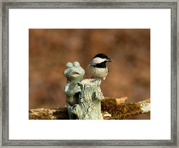 Black-capped Chickadee And Frog Framed Print