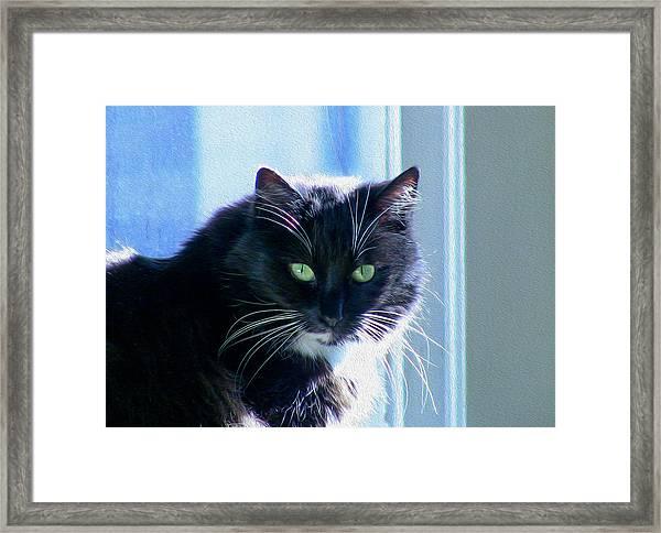 Black Cat In Sun Framed Print