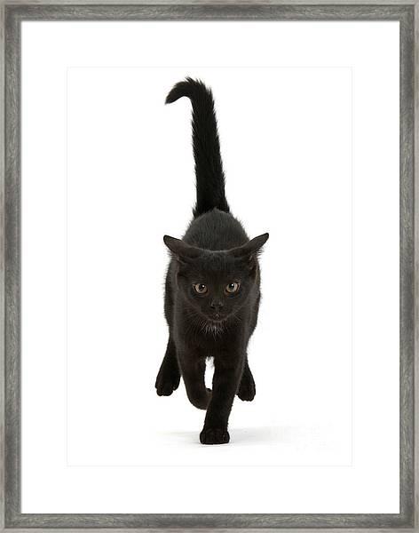 Black Cat On The Run Framed Print