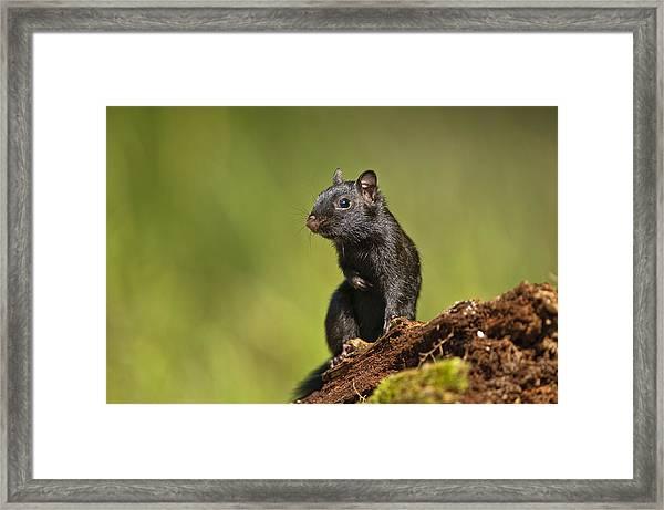 Black Chipmunk On Log Framed Print