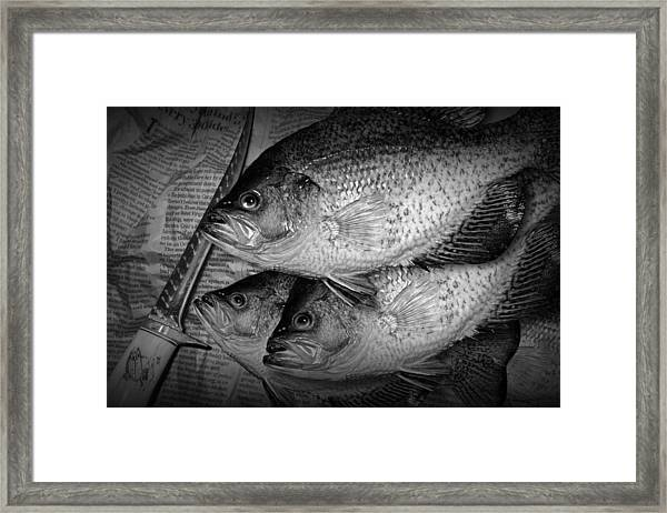 Black Crappie Panfish With Fish Filet Knife In Black And White Framed Print