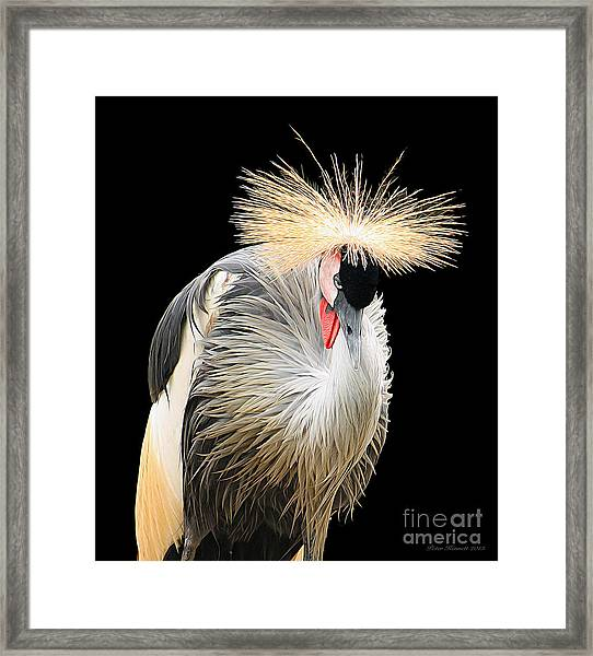 Black Crowned Crane Framed Print