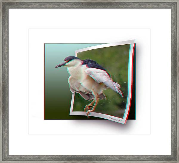 Black Crowned Night Heron - Use Red-cyan 3d Glasses Framed Print