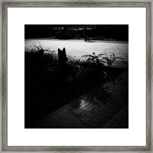 Black Dog  #dog #animal #pet #portrait Framed Print