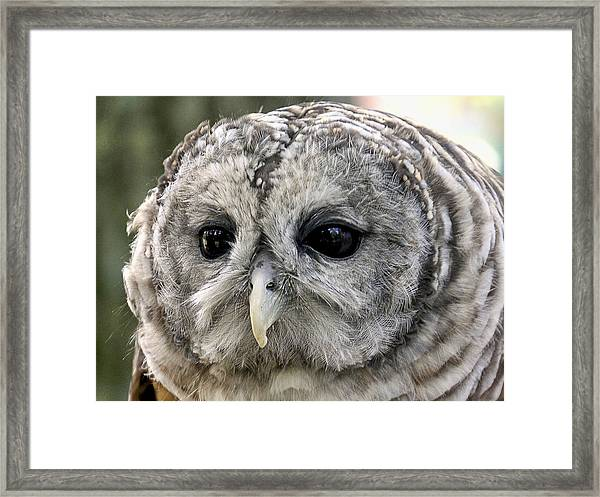 Framed Print featuring the photograph Black Eye Owl by Bob Slitzan