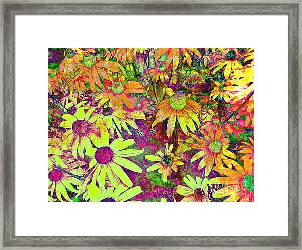 Black-eyed Susan   Abstract  Framed Print