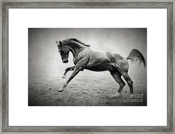 Black Horse In Dust Framed Print