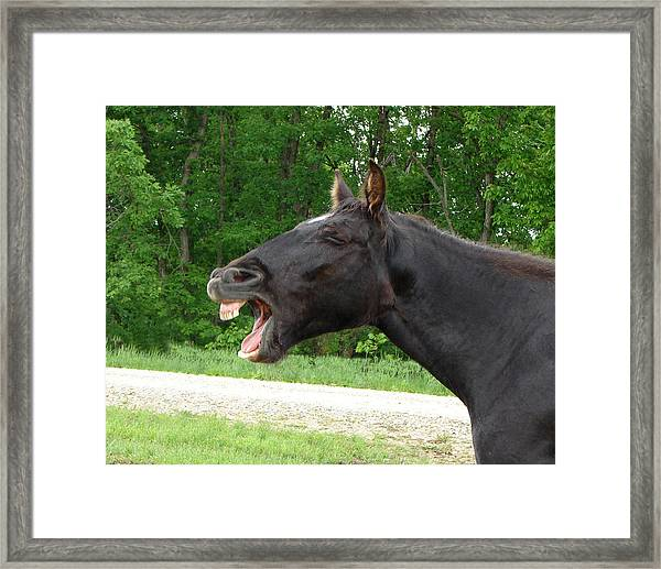 Black Horse Laughs Framed Print
