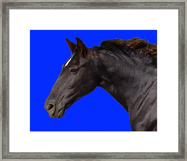 Black Horse Spirit Blue Framed Print
