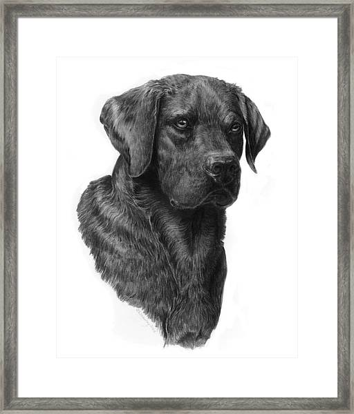 Black Lab Head Study 2 Framed Print