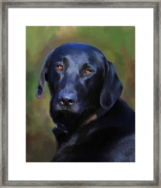 Black Lab Portrait Framed Print