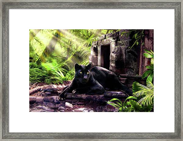 Black Panther Custodian Of Ancient Temple Ruins  Framed Print