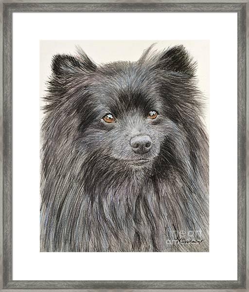 Black Pomeranian Painting Framed Print