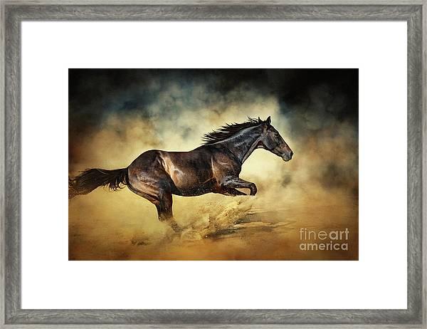 Black Stallion Horse Galloping Like A Devil Framed Print