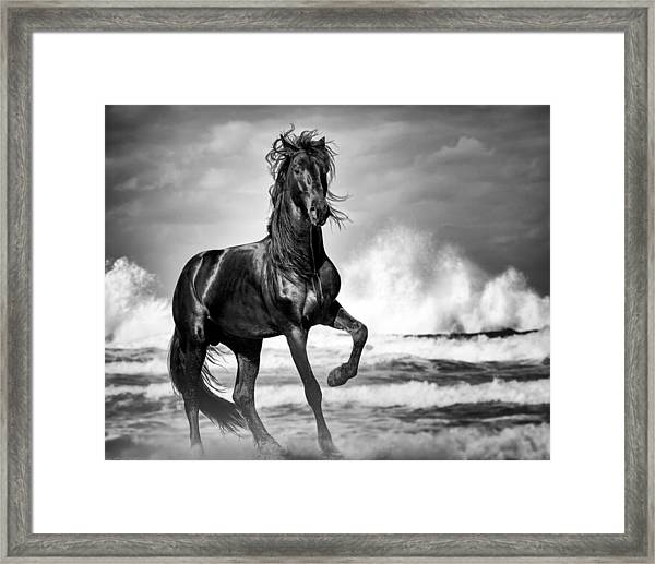 Framed Print featuring the photograph Black Stallion In Waves by Gigi Ebert