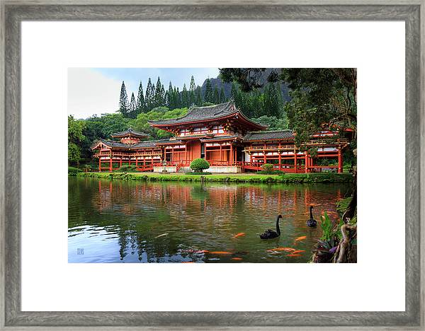 Black Swans At Byodo-in Framed Print