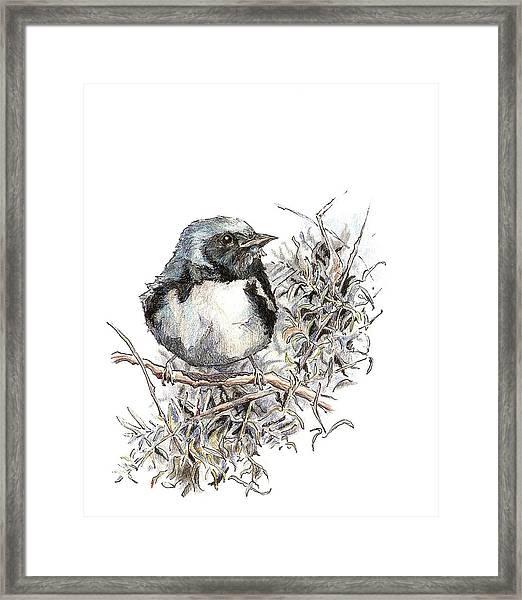Black-throated Blue Warbler Framed Print