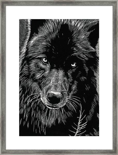 Black Wolf Framed Print