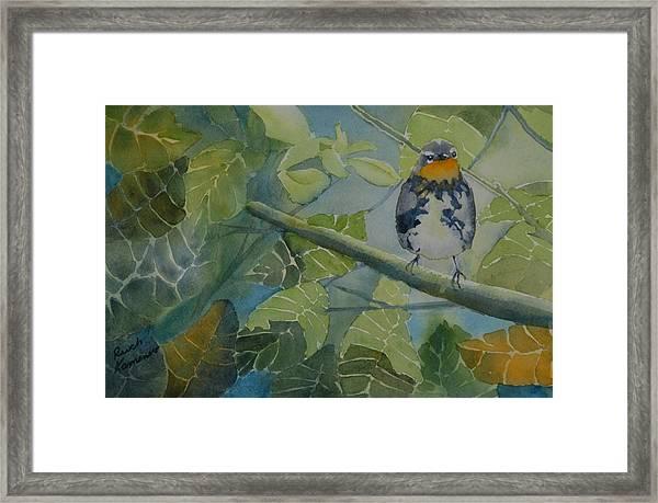 Blackburnian Warbler I Framed Print