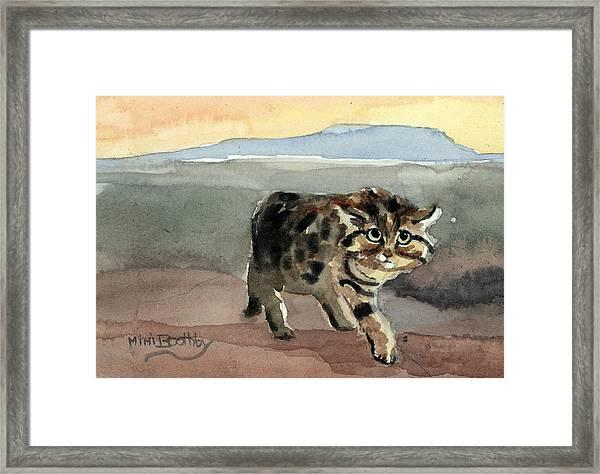 Blackfooted Cat Framed Print
