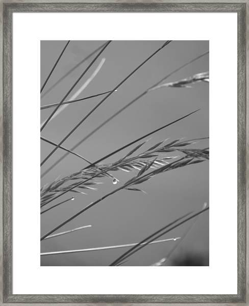 Blades Of Gray Framed Print