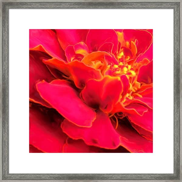 Blazing Pink Marigold Framed Print