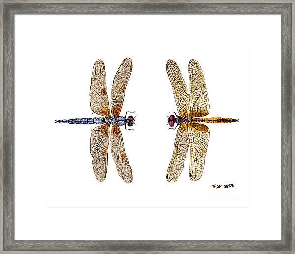 Bleached Skimmer And Hyacinth Glider Framed Print