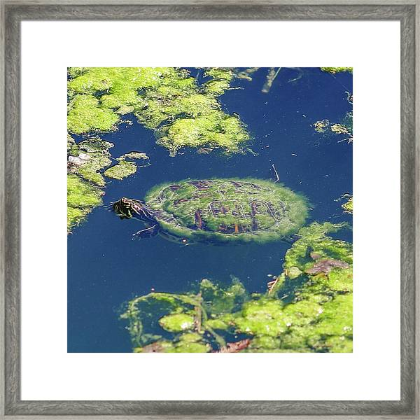 Blending In Turtle Framed Print