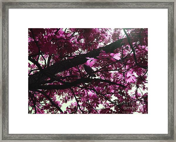 Blissful Morning Framed Print