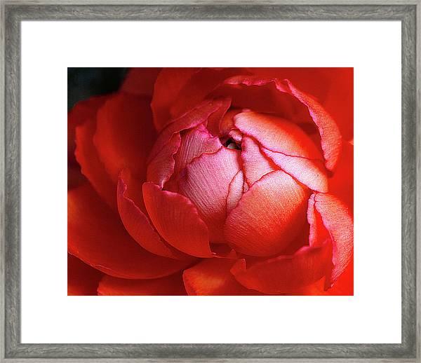 Blissful Framed Print