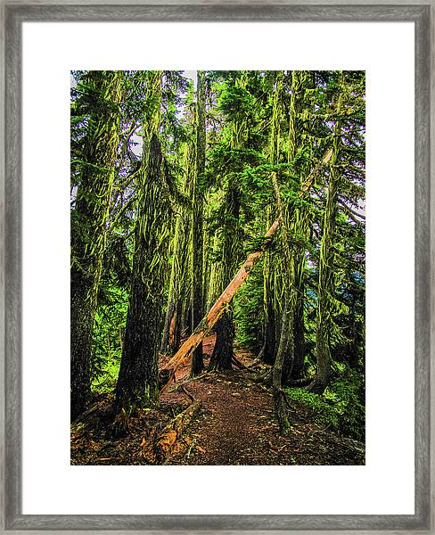 Blocked Trail Framed Print