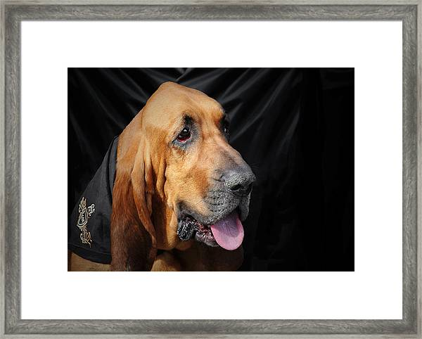 Bloodhound - Governed By A World Of Scents Framed Print