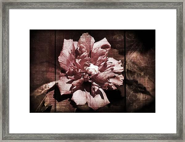 Bloomin Framed Print