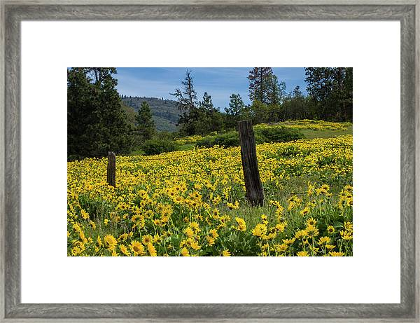 Blooming Fence Framed Print