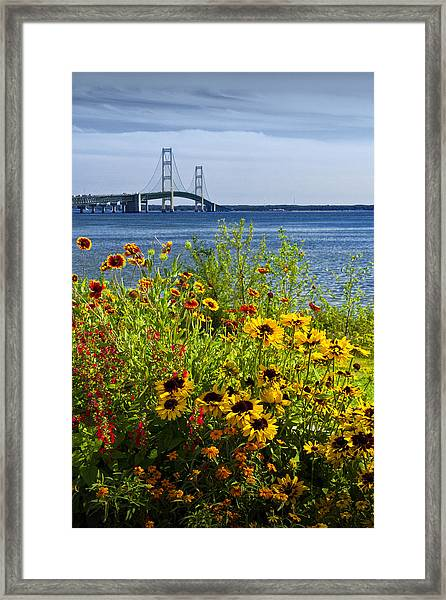 Blooming Flowers By The Bridge At The Straits Of Mackinac Framed Print