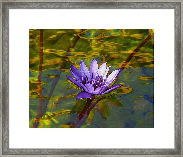 Blooming Into Life's Peace Dedicated To Toni R. Neal Framed Print by Sherwanda Irvin