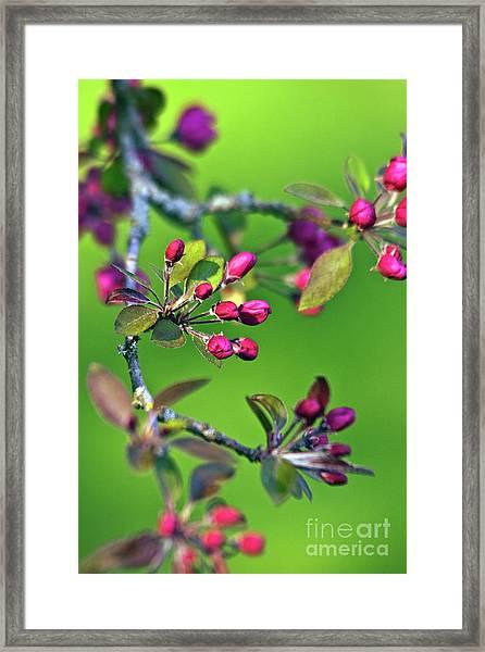 Blooming Spring Poetry Framed Print